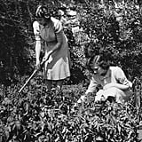 "Elizabeth and Margaret worked on their garden as part of the government's ""Dig For Victory"" campaign in 1943."