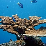 The Great Barrier Reef is the biggest living structure on the planet.