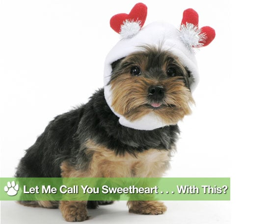 Gag Gifts For Pets on Valentine's Day