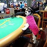 And I didn't go gambling; I went winning.