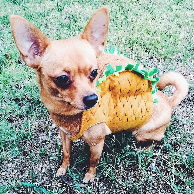 food halloween costume ideas for dogs popsugar food