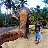 Even animals decided it was time to take a selfie, like this elephant that took a tourist's GoPro to snap this gem.
