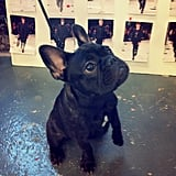 Rag & Bone waited on a Frenchie to decide which runway look was his favourite. Source: Instagram user rag_bone