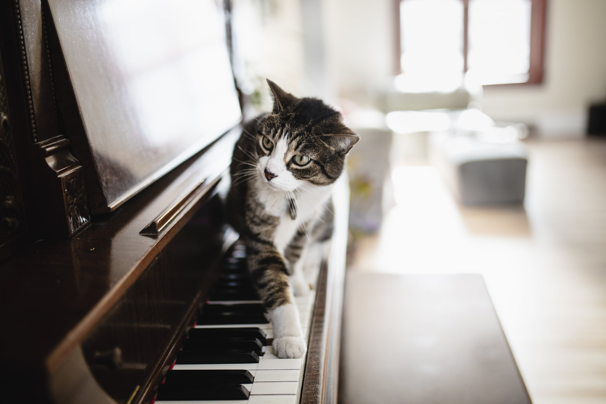 Tabby cat and a piano