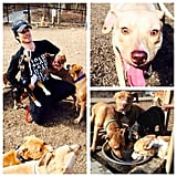 Ian Somerhalder was attacked by all his adorable puppies. Source: Instagram user iansomerhalder