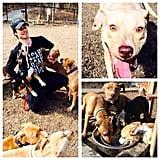 Ian Somerhalder was attacked by all his adorable puppies. Source: Instagram user iansomerhalder