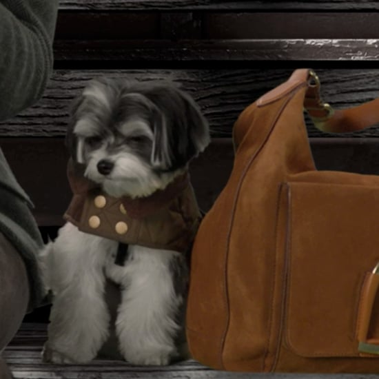 Ralph Lauren's ASPCA Dog Video