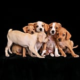 2nd Place, Puppies, Charlie Nunn