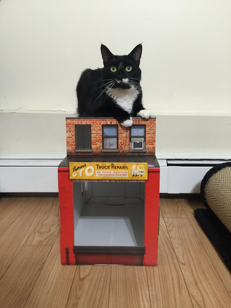 Famous Oto Brooklyn House For Cats