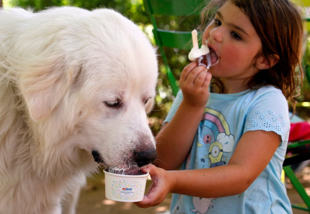 PetSmart Free Ice Cream