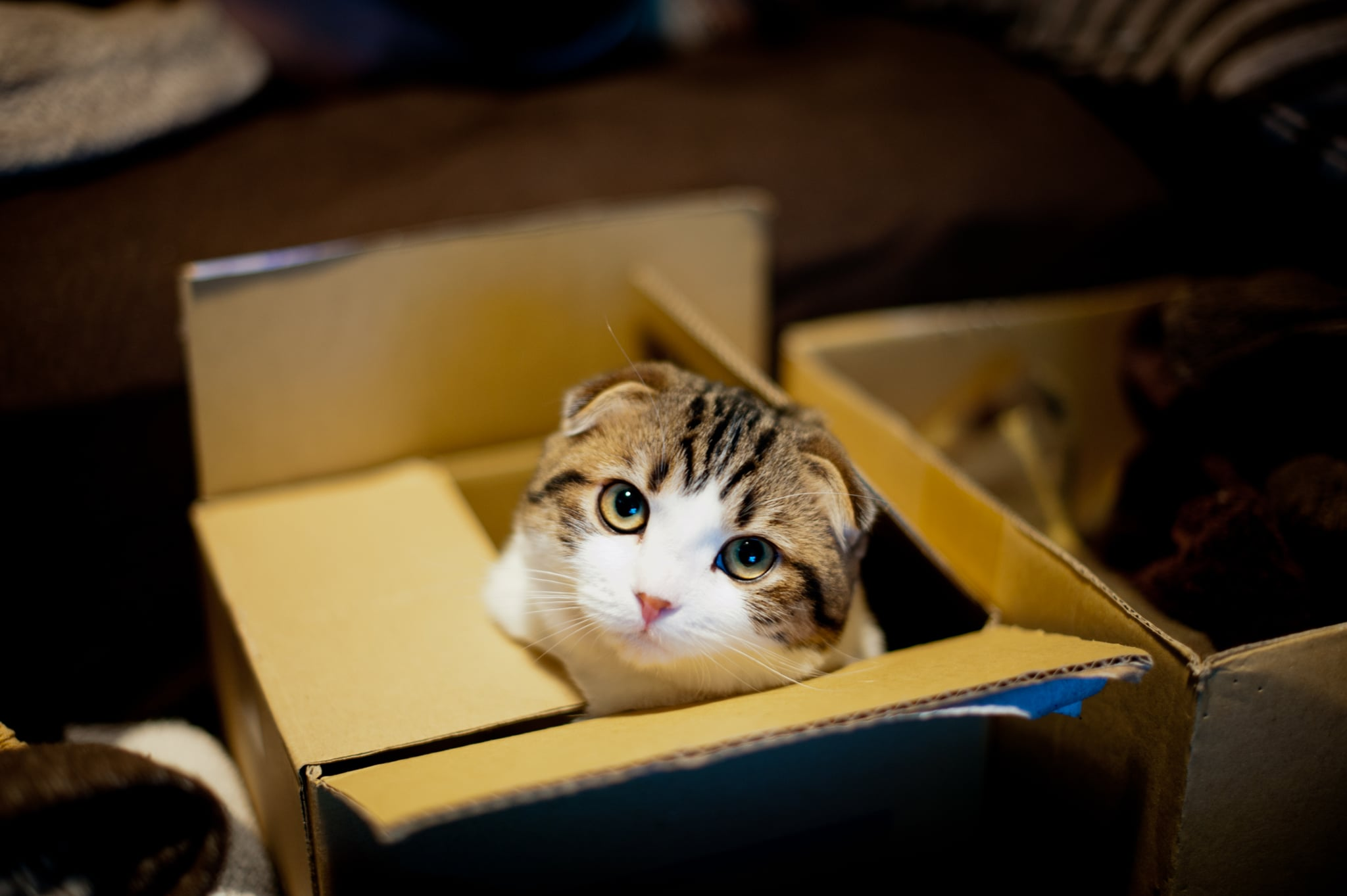 Cat in box and looking up.