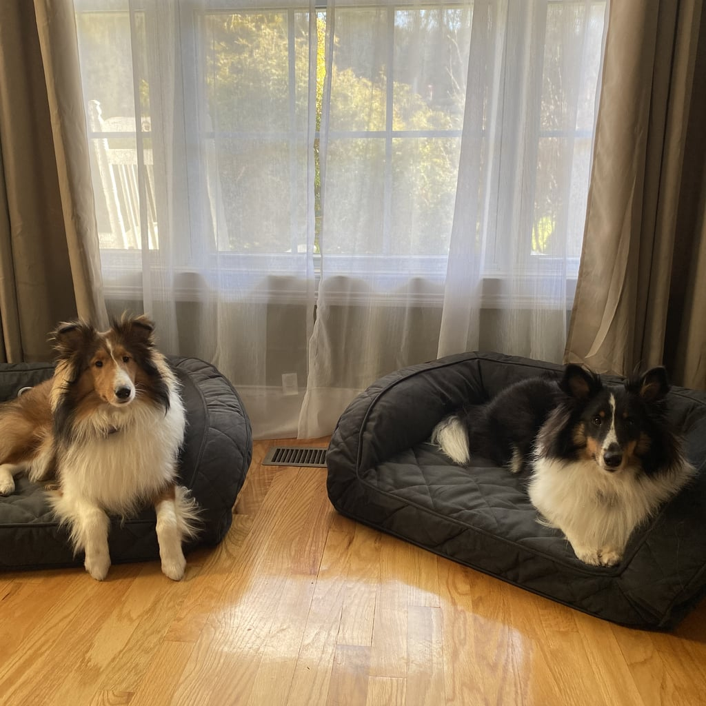 This Orvis Dog Bed Is the Only One My Puppies Like | Review