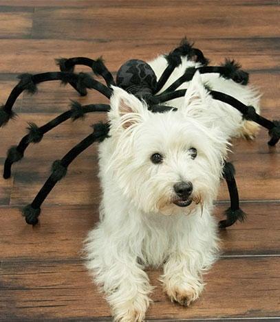 Spider Dog, Spider Dog
