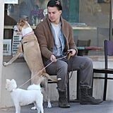 Channing Tatum's rescue pup, Lulu, and his wife Jenna Dewan's pretty pooch, Meeka, waited outside for her in Santa Barbara in February 2013.