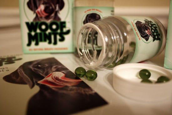 Axle the Pit Bull Reviews Woof Mints