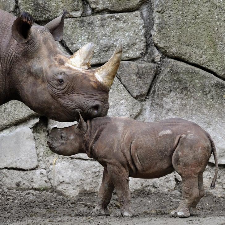 Baby Black Rhino at Tokyo's Ueno Zoo! Photo 2