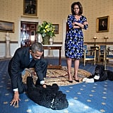 The president plays on the floor with his dogs, and Michelle is #notimpressed.