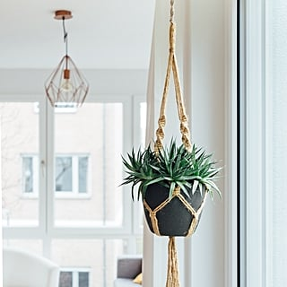 Best Indoor Hanging Plants