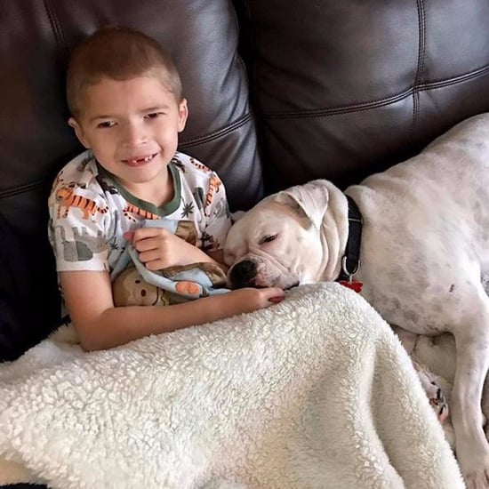Nonverbal Boy Gets Deaf Dog Best Friend