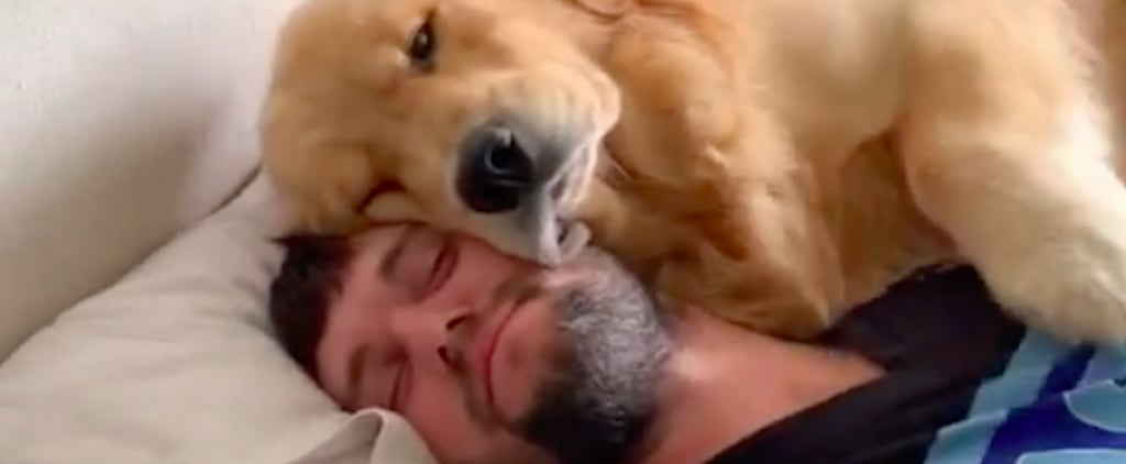 Man Gets Woken Up by Golden Retreiver