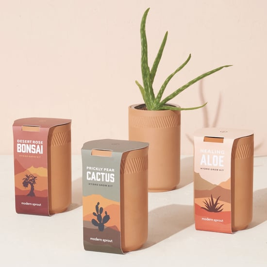 Grow a Houseplant With These Cute Terracotta Growing Kits!