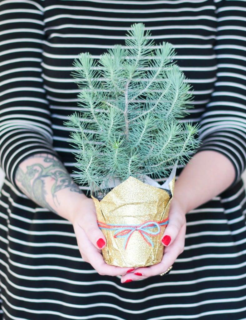 Wrapped Mini Tree