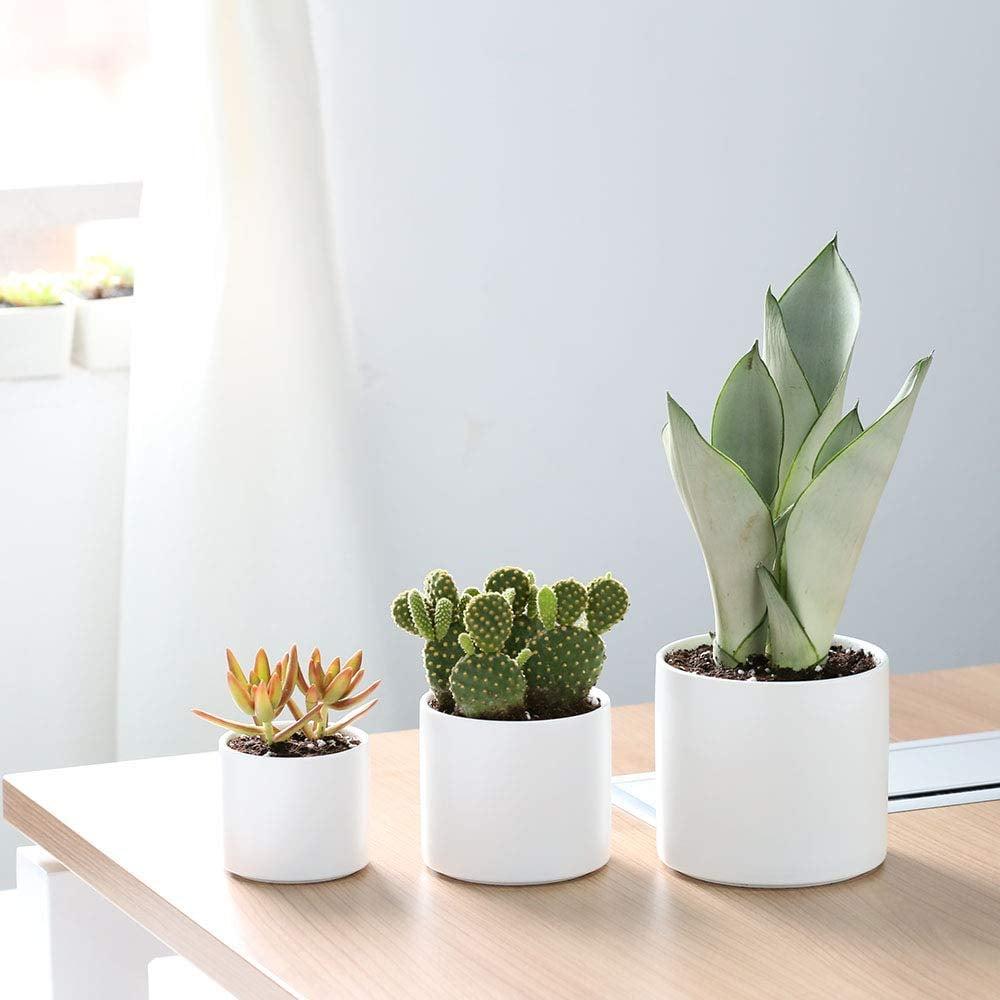 White Succulent Plant Pots