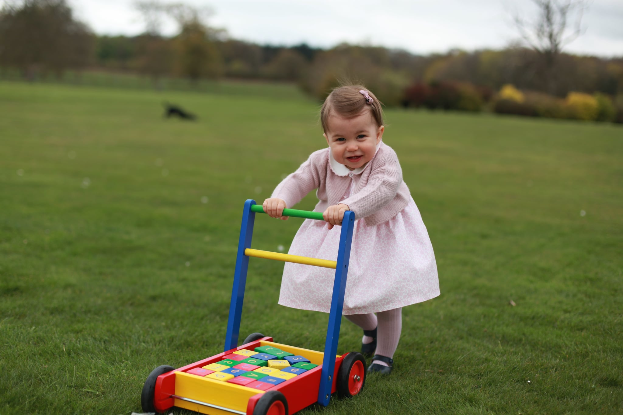 ANMER HALL, ENGLAND - APRIL 2016:  In this undated handout photo provided by HRH The Duke and Duchess of Cambridge released on May 1, 2016, Princess Charlotte of Cambridge looks on as she walks while pushing her toy blocks across the lawn outside as her mother Catherine, Duchess of Cambridge takes her photo ahead of her first birthday on May 2, 2016 at Anmer Hall on April 2016 in Norfolk, England. The young Princess will celebrate her first birthday on May 2. (Photo by HRH The Duchess of Cambridge via Getty mages) EDITORIAL USE ONLY. NO COMMERCIAL USE (including any use in merchandising, advertising or any other non-editorial use including, for example, calendars, books and supplements). This photograph is provided to you strictly on condition that you will make no charge for the supply, release or publication of it and that these conditions and restrictions will apply (and that you will pass these on) to any organisation to whom you supply it. All other requests for use should be directed to the Press Office at Kensington Palace in writing.