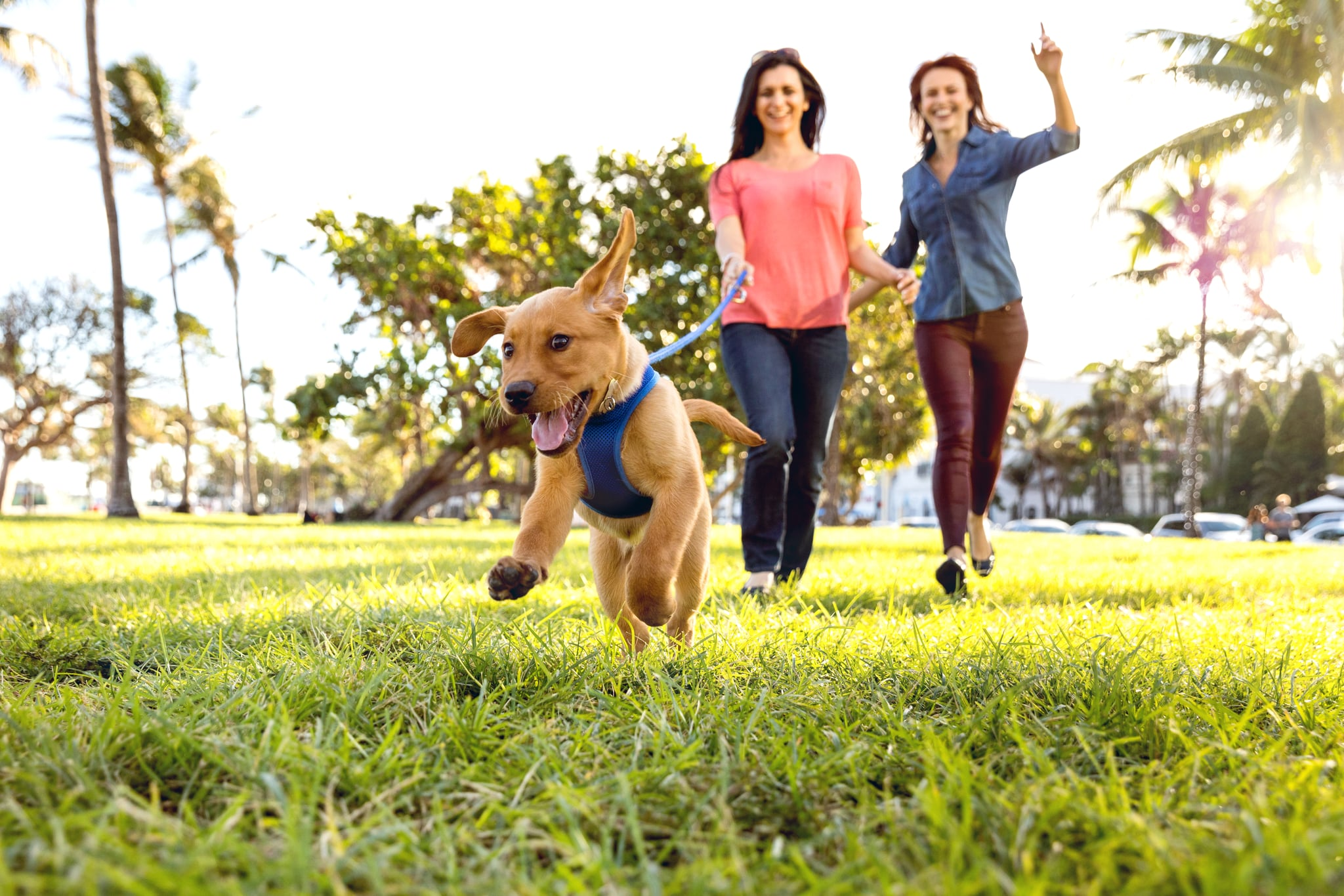 Give Your Dog Some Belly Rubs, Because a Study Confirmed That Dog Owners Get More Exercise