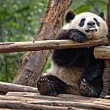 Atlanta Zoo Virtual Tour