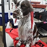 Most owners and handlers are more than happy to let people pet their dogs and chat with them — after they're done being judged. Because grooming is so labor-intensive, the owners don't want any of that to be disturbed by grabby bystanders.
