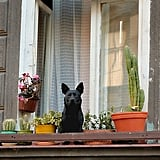 Keeper of the Cacti