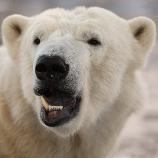 Walker the Polar Bear's Birthday Pictures