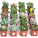 Unique Collection of Mini Succulents