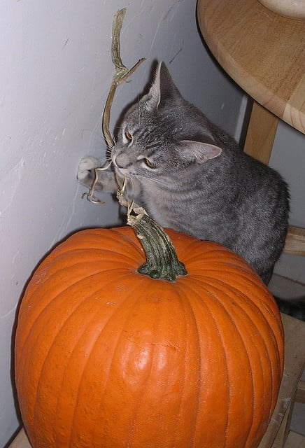 When you can't get to the sweet flesh of a pumpkin, sometimes the other parts will do. Source: Flickr user lori.b