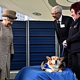 The queen looked delighted when she met a corgi during a visit to Battersea Dogs and Cats Home on Tuesday to open the new Mary Tealby kennels.
