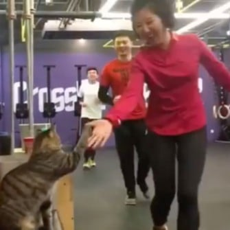 CrossFit Cat Gives High Fives