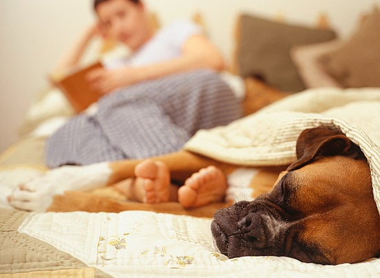 Pet Peeves: Why Does My Dog Snore?
