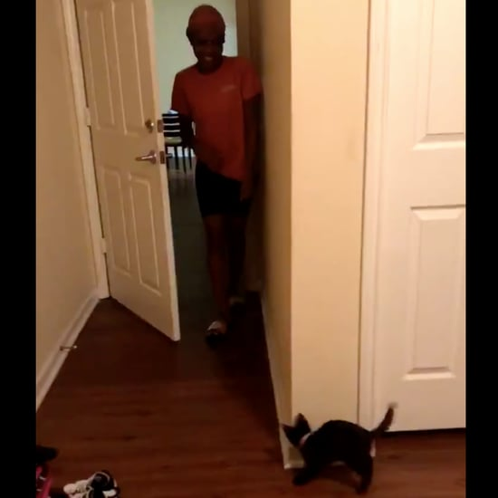 Kitten Tries to Scare Owner