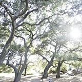 Between classes, take a walk through the oak trees.