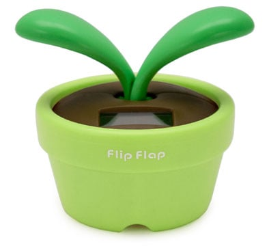 Love It or Hate It? Flip Flap Plant