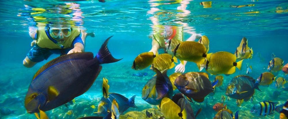 Snorkel at Rainbow Reef
