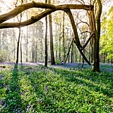Whippendell Wood in Watford, England