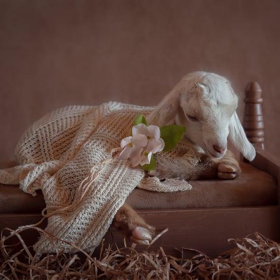 Photos of Newborn Baby Goats