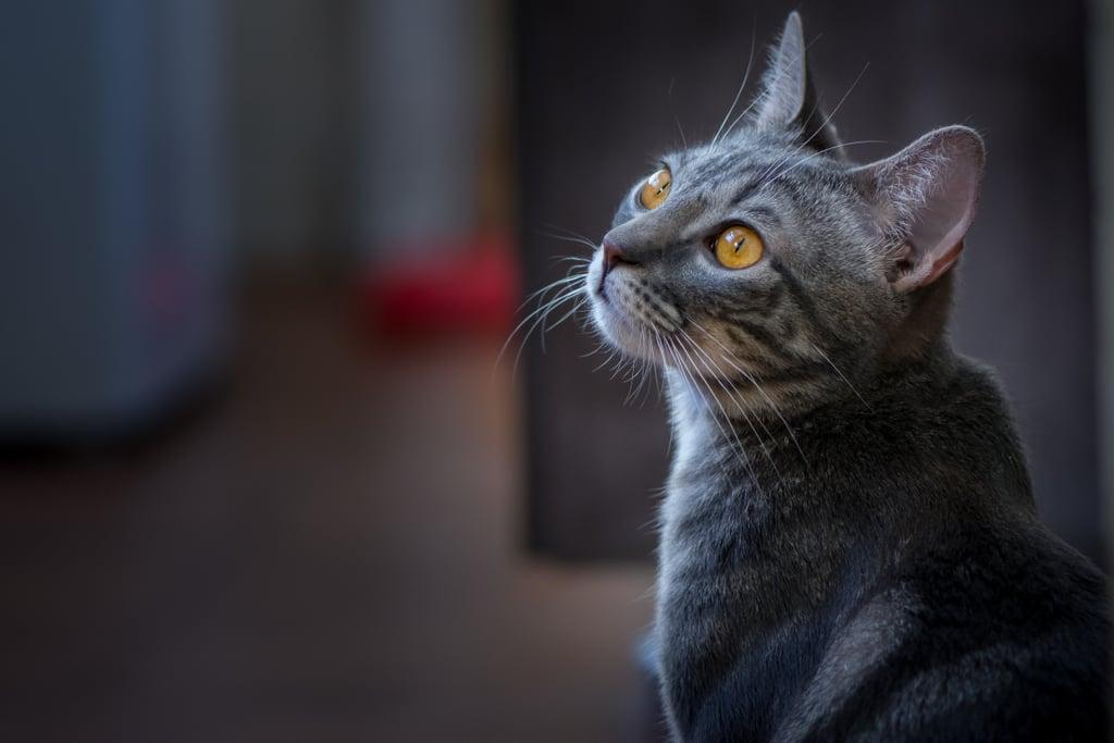 Whatcha lookin' at, kitty?