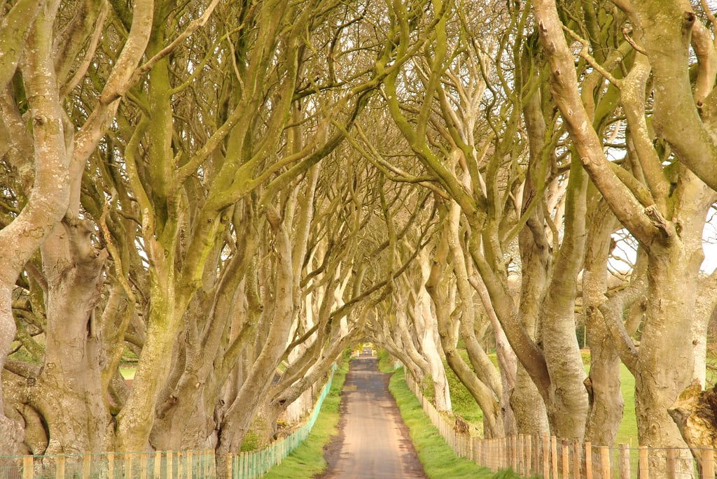 Ballymoney, Ireland's Dark Hedges surround one of the most famous roads in the UK, but you might recognize the collection of hedges for its appearance as part of the King's Road on GOT.