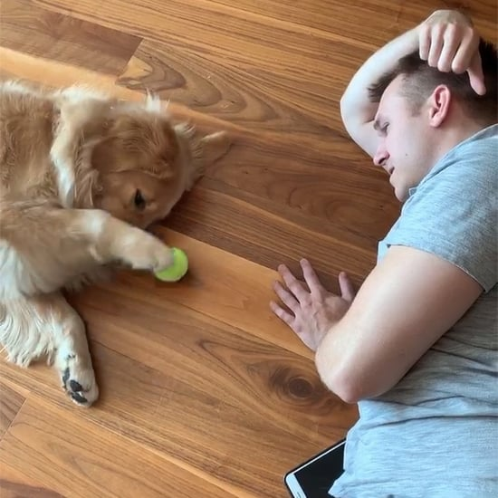 Golden Retriever Playing Lazy Game of Fetch