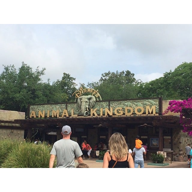 Spend a Half Day at Animal Kingdom