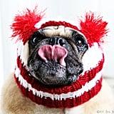 Candy Cane Dog Hat