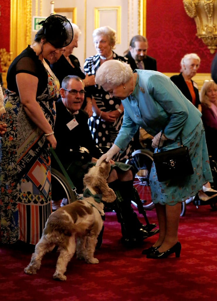 Least: When She Knelt Down to Pet This Dog